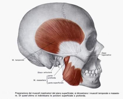 Patologie articolazione temporo-mandibolare