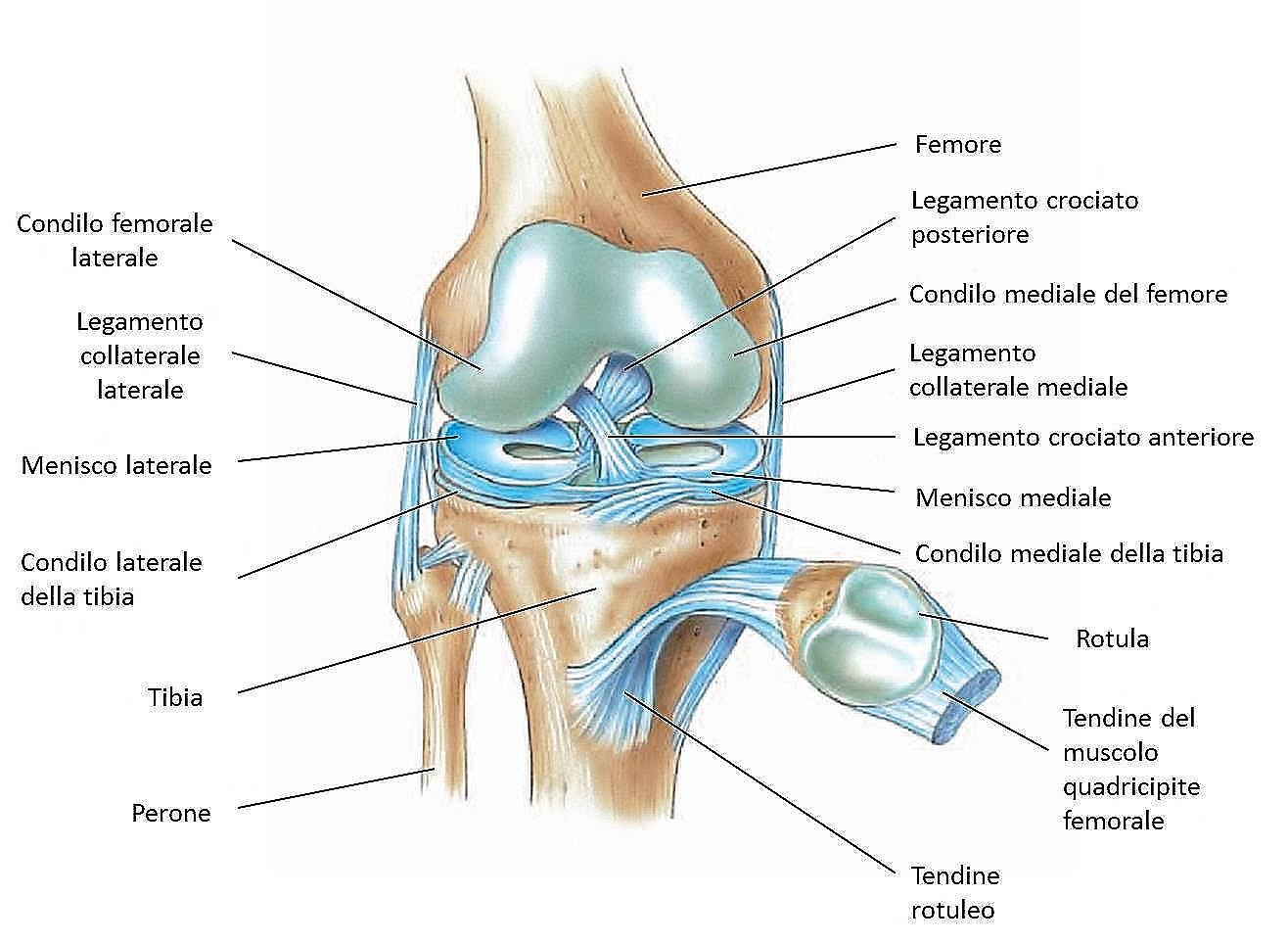 Dolore al ginocchio: quali trattamenti e terapie sono più efficaci?